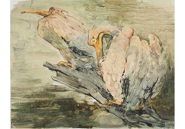 (Русский) Пеликаны